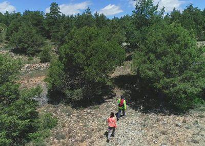 Ruta senderista por el Sabinar